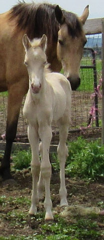 Tawnys 20 filly Front.JPG