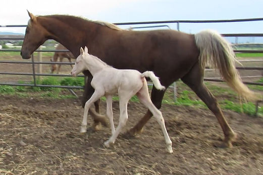 Lucky and 20 colt W.jpg