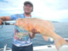 cairns fishing adventures, fishing charters cairns, Queensland, Australia, cairns reef fishing charters for Coral Trout