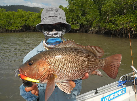 cairns fishing adventures, fishing charters cairns, Queensland, Australia, Mangrove Jack cairns fishing charters.JP
