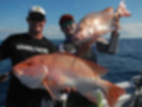 cairns fishing adventures, fishing charters cairns, Queensland, Australia, Nannygai, Saddle tail snapper