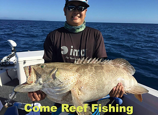 cairns fishing adventures, fishing charters cairns, Queensland, Australia, Gold Spot Cod Cairns Fishing Charters