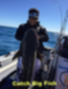 cairns fishing adventures, fishing charters cairns, Queensland, Australia, Cobia Cairns Fishing Trips