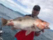 cairns fishing adventures, fishing charters cairns, Queensland, Australia, Golden snapper, Fingermark