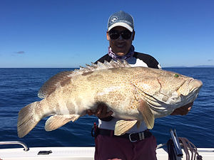 cairns fishing adventures, fishing charters cairns, Queensland, Australia, Gold Spot Cod cairns fishing adventures