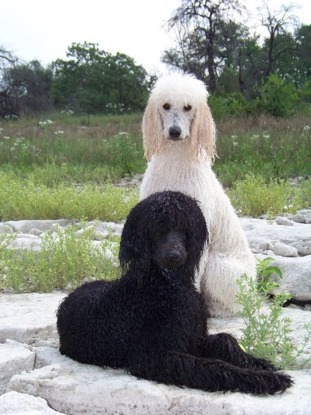 Ana (2006 Litter) & Paisley (2008 Litter) in 2009