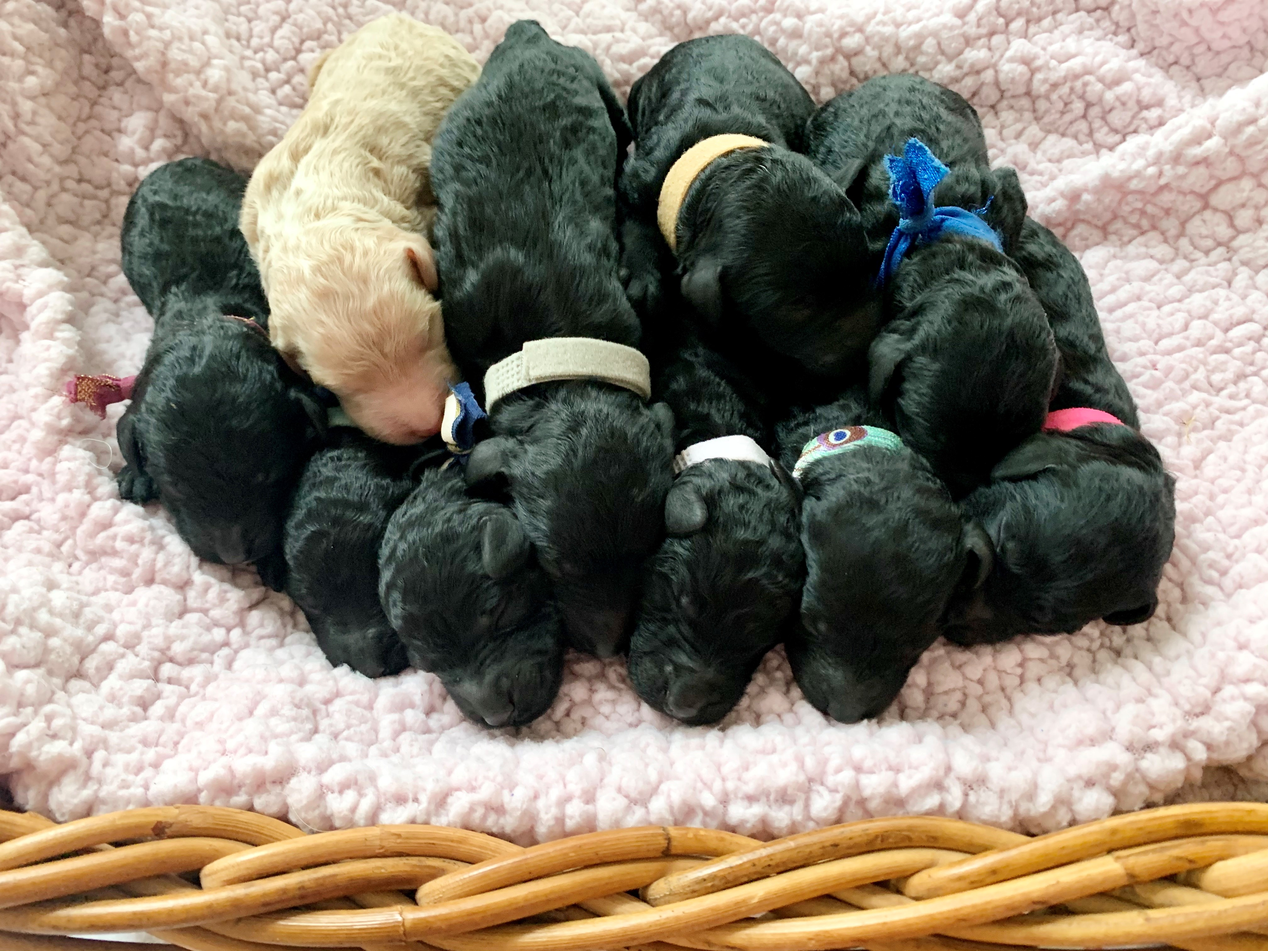 All 10 Babies in a Basket
