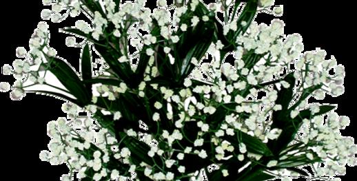 Gypso Bush X14