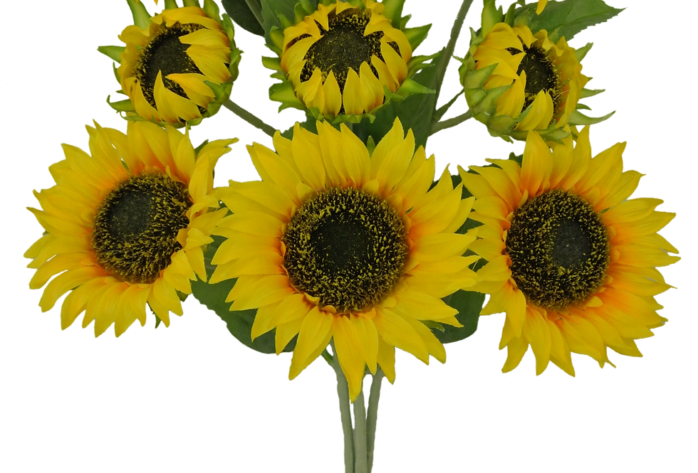 "21"" Sunflower Bush x9"