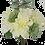 """Thumbnail: 15"""" Dahlia Rose Succulent Bundle"""