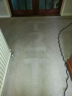 Carpet cleanignRushden
