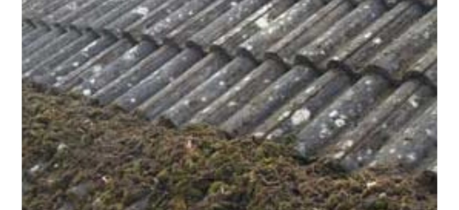 moss removal Rushden