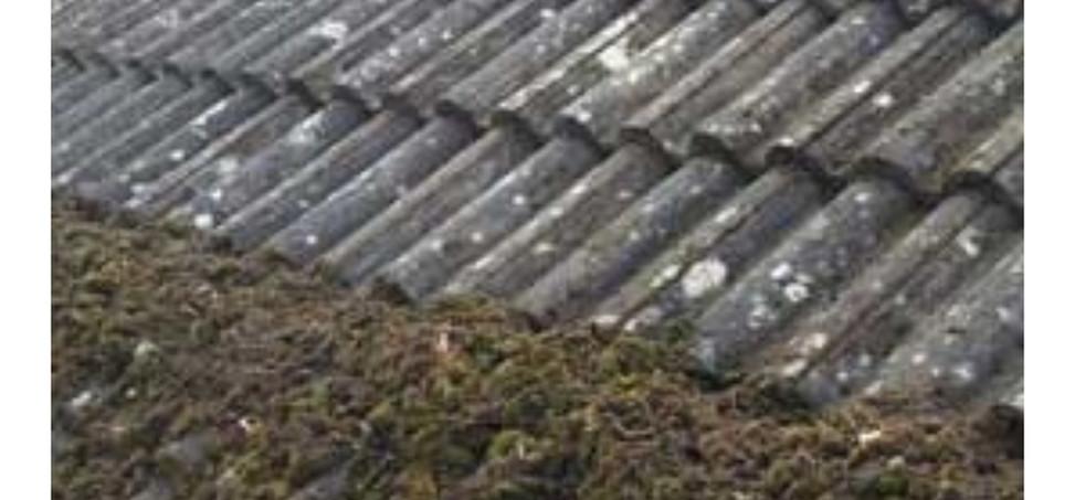 moss removal Rushden