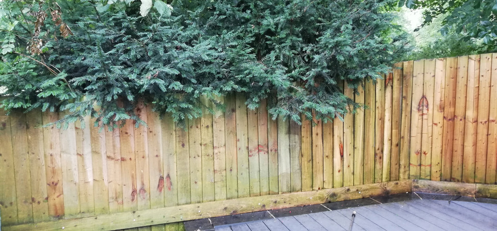 Fence cleaning Stanwick