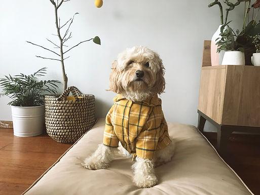 Sarı Yünlü Oduncu Gömleği