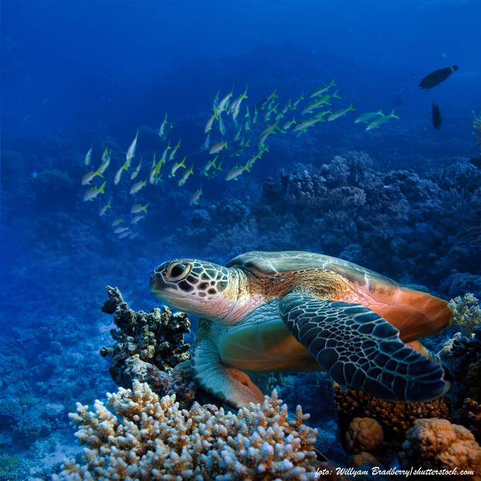 foto-mergulho-angra-dos-reis.jpg