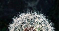 info coronavirus.jpg