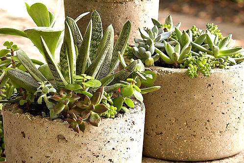 DIY Hypertufa Pot and Arrangement