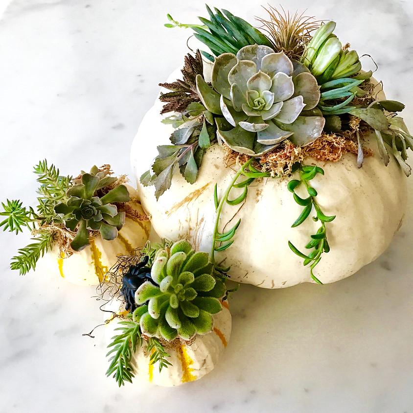 DIY Succulent Topped Pumpkin