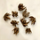 Thumbnail: Ranunculus Corms/Bulbs