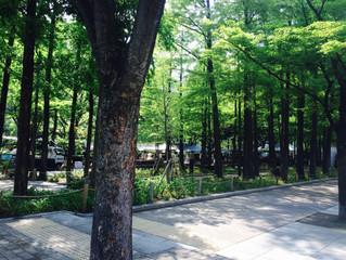 公園利用について思うこと。