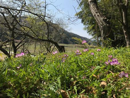 染色の森:種まきと春の雑草で染物体験