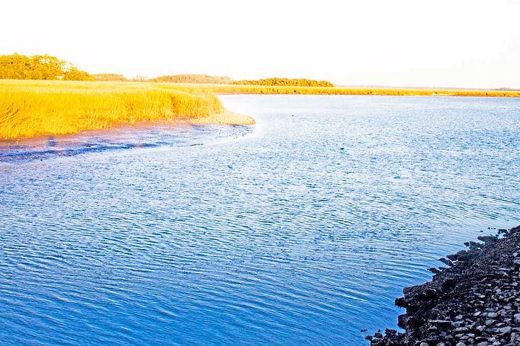Sapelo-Island.jpg