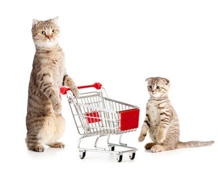 adult-cat-vs-kitten.jpg