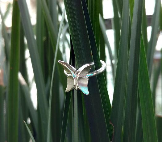 anillo-plantas.jpg