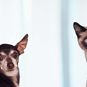 מעשייה בחתול ובכלב