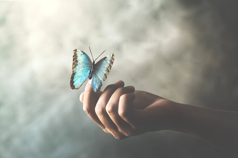 a butterfly leans on a woman's hand.jpg