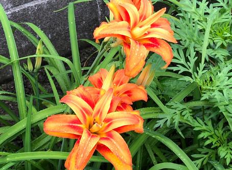 雨の中に鮮やかな花