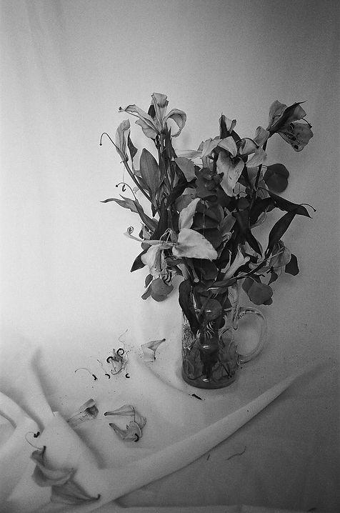 Lea Banchereau | Still Life
