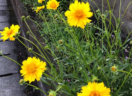 鮮やかな黄色の花