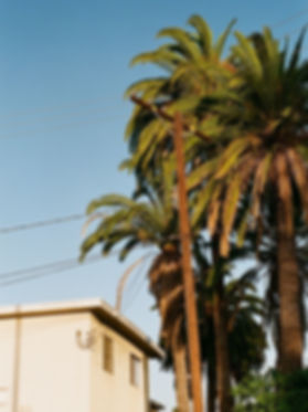 Lea Banchereau | Los Angeles
