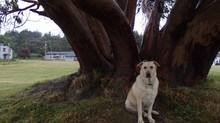Day 13 - Dog mind Tree mind