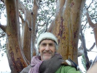 Madrona Day 5 - Tree Dance Teacher