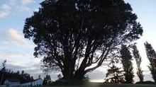 Day 11 - Night Tree Listening
