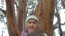 Day 17 - A Tree Evangelist