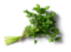 Plants-and-Herbs.png