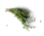 thyme_2_edited.png