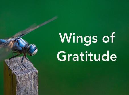 Wings of Gratitude