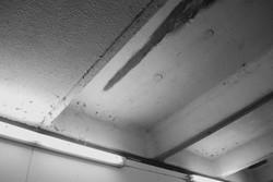 Ceiling. 2012.