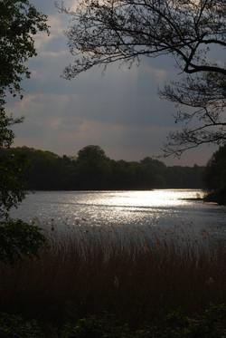Virginia water, Surrey. 2012.