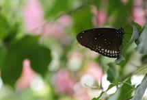 Vlinders_3817_3
