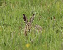 Verstoppen in het hoge gras
