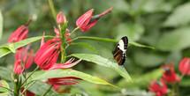 Vlinders_3791_4