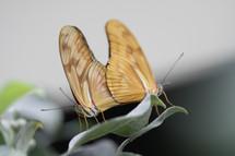 Vlinders_3877_6