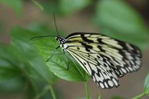Vlinders_5153_5
