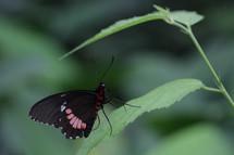 Vlinders_3886_7